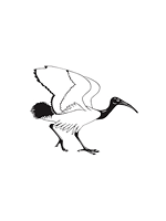 British Ornithologists' Club Logo